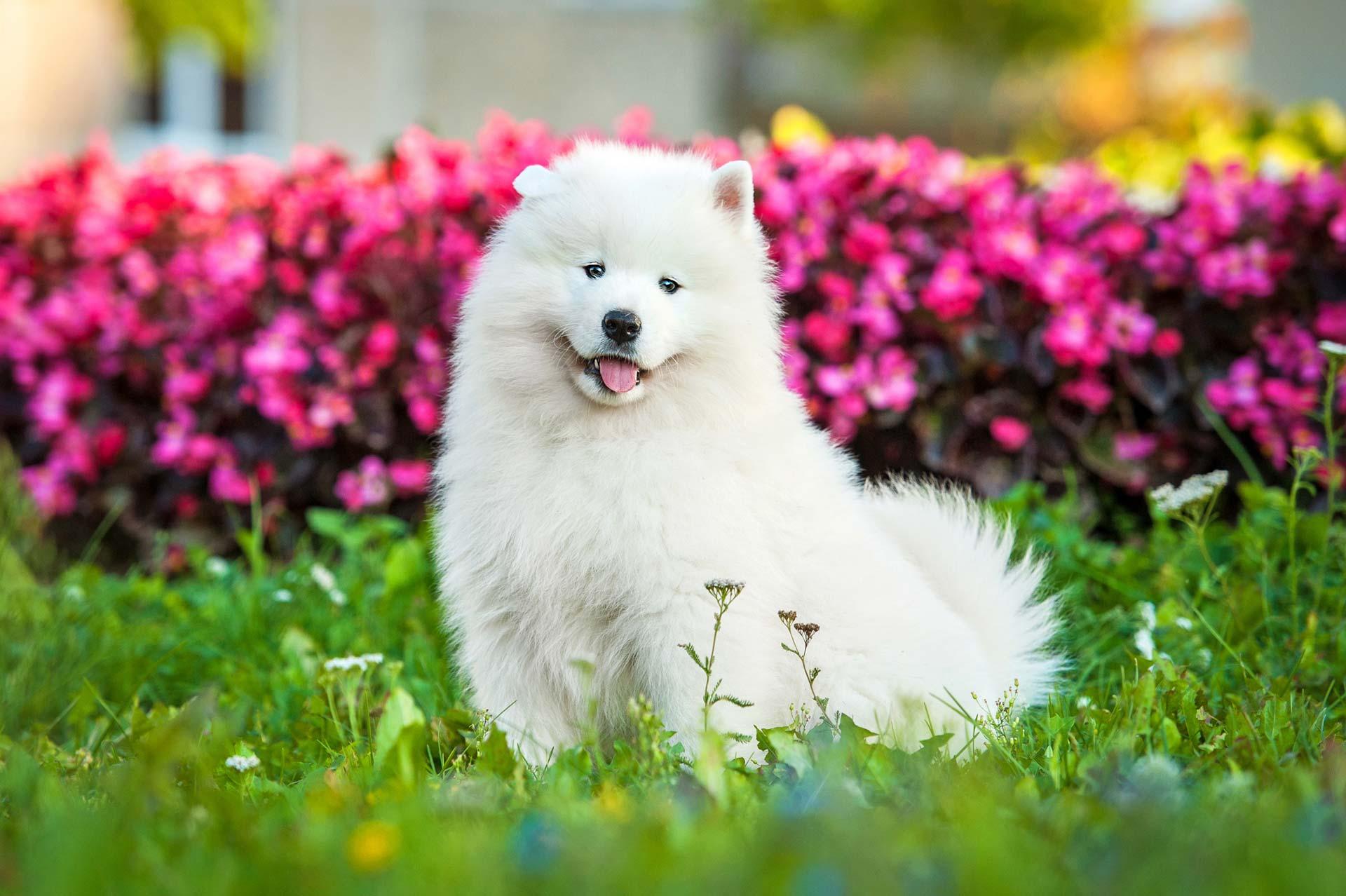 Prices – Beaufort Dog