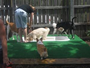 Doggie Water Park